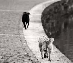 Chiude rifugio per cani di Volpiglia a Noto, al via la campagna di adozione del comune